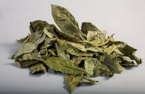 Chacruna (Psychotria viridis)
