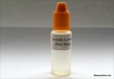 Leonotis Leonurus (Pure Petals)